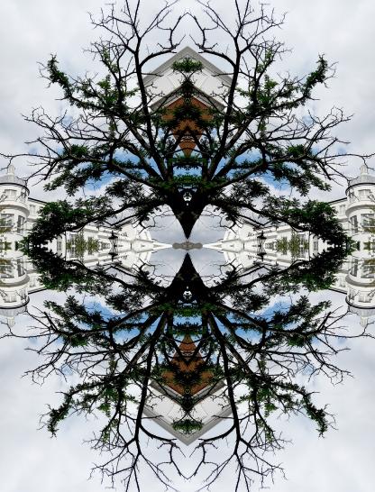 Specular London Tree
