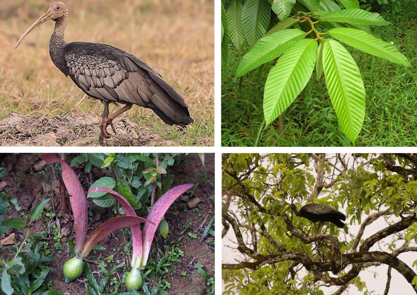 Ibis natural habitat.jpg